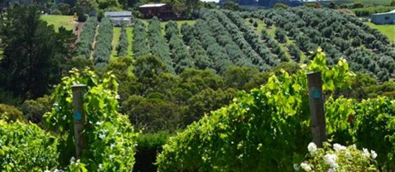 Food and Wine Private Tour