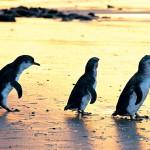 Private Penguin Tour