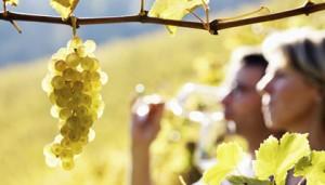 go-wine-tasting