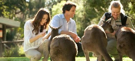 Feed the Kangaroos Shore Excursion